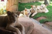 Zoo Beto Carrero world é exemplo em Santa Catarina