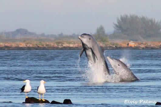 Lugares para ver golfinhos em Santa Catarina | Casa do Turista