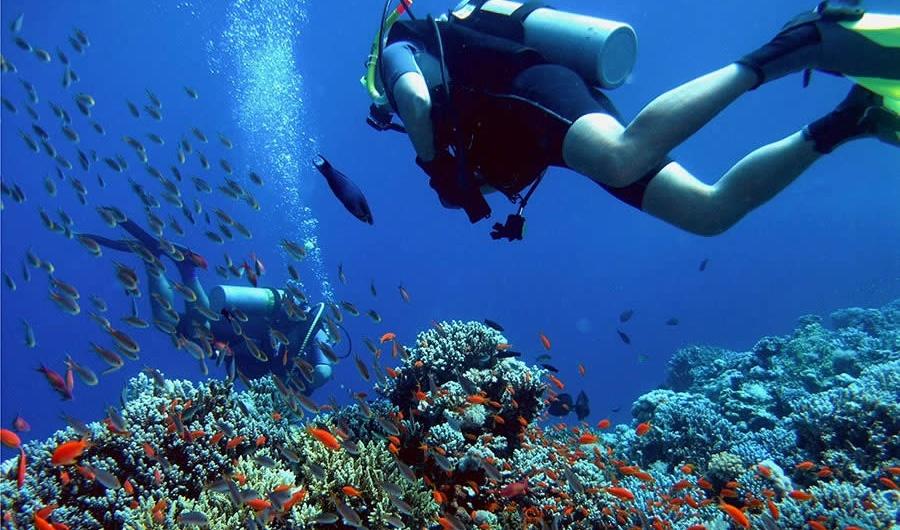 Onde praticar mergulho em Bombinhas? Uma das maiores atrações de Bombinhas são os locais incríveis em que se pode fazer mergulho! Lugares com águas transparentes e com vida marinha preservada