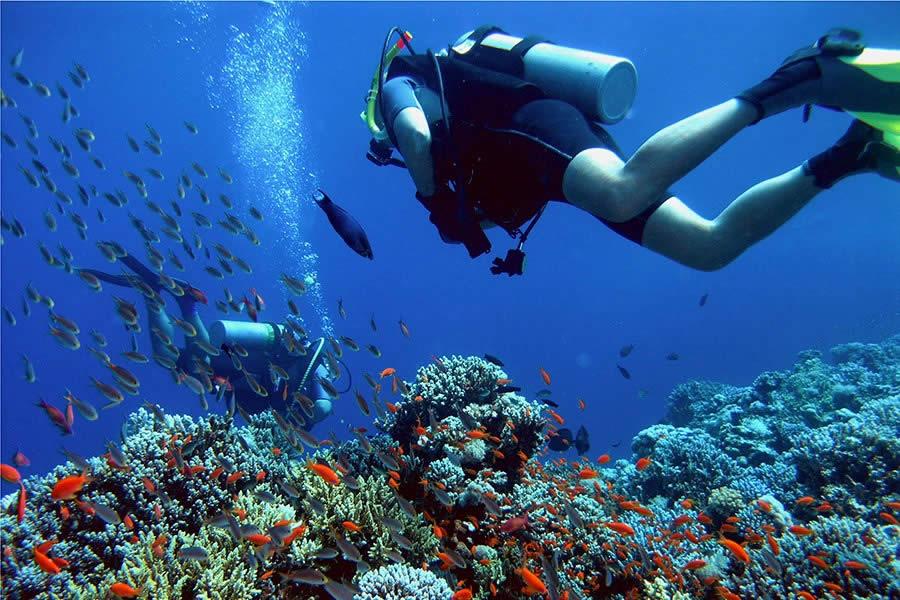 Resultado de imagem para mergulho