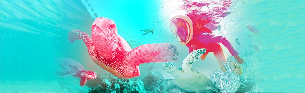 Aqua Aventura - Snorkeling em Bombinhas