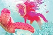 Aqua Aventura - Snorkeling na Praia de Sepultura em Bombinhas, SC