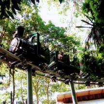 Trem da Fantástica Floresta