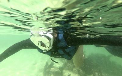 Começou a temporada de snorkeling em Bombinhas – Casa do Turista